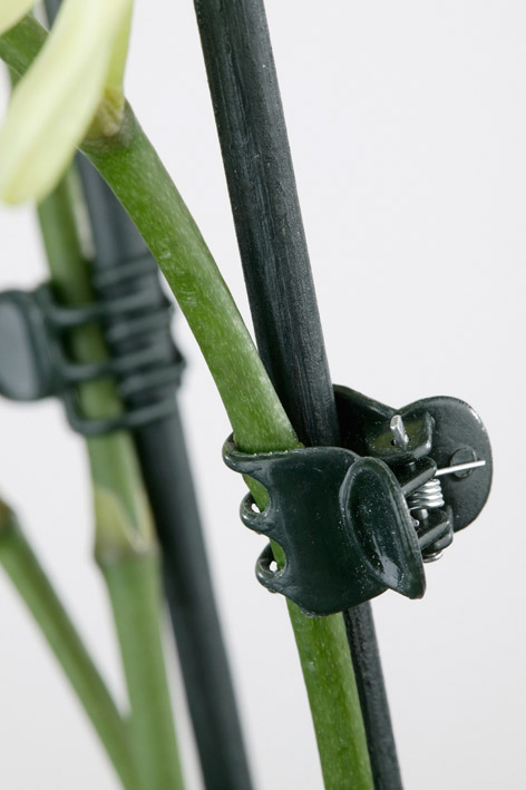 Orchid cane clamps